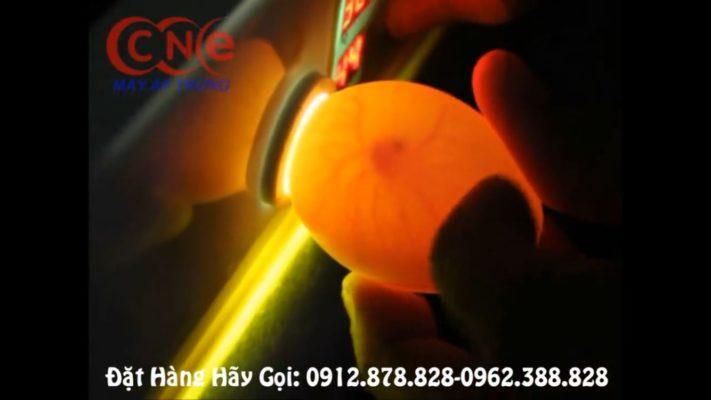 Đèn soi trứng tích hợp trên máy cn56