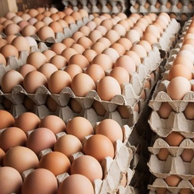 Bảo quản trứng