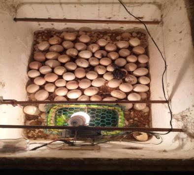 Máy ấp trứng đảo tay