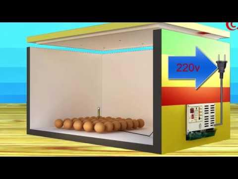 cách tự chế máy ấp trứng đảo tay