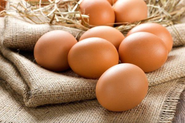 trung gà Máy Ấp Trứng CNE