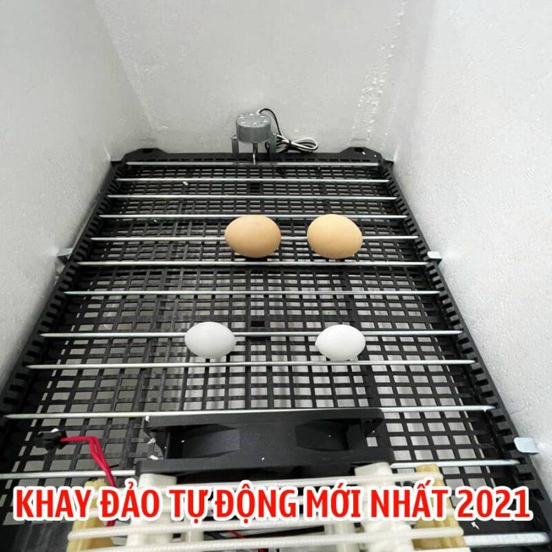 khay dao tu dong CNE 4 Máy Ấp Trứng CNE